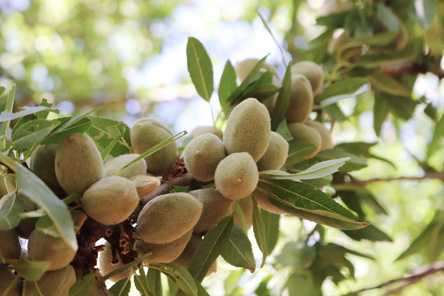 Select Harvests Almonds
